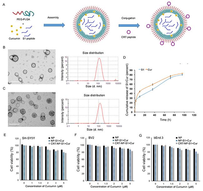 Characterization of PLGA nanoparticles.