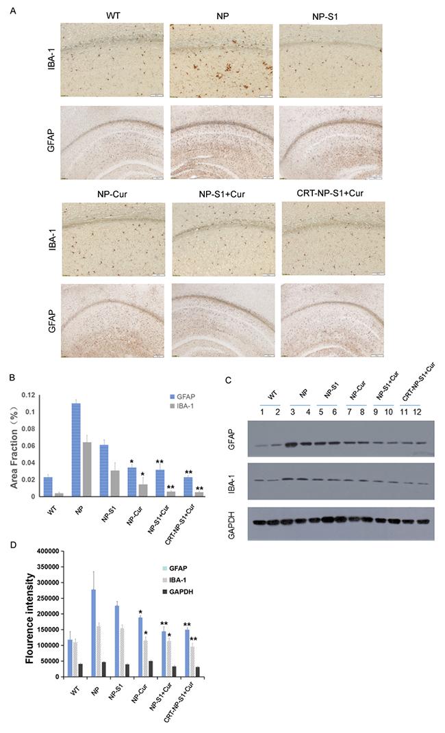 PLGA NPs reduced microgliosis and astrogliosis in AD mice.