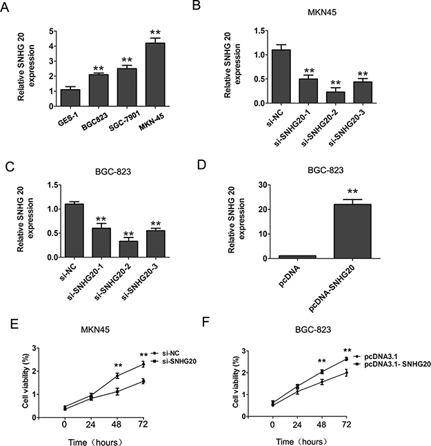 The increased expression of SNHG20 in GC cells.