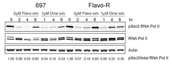 Phosphorylation of Ser2 of RNA Pol II CTD is more resistant against flavopiridol's drug action.