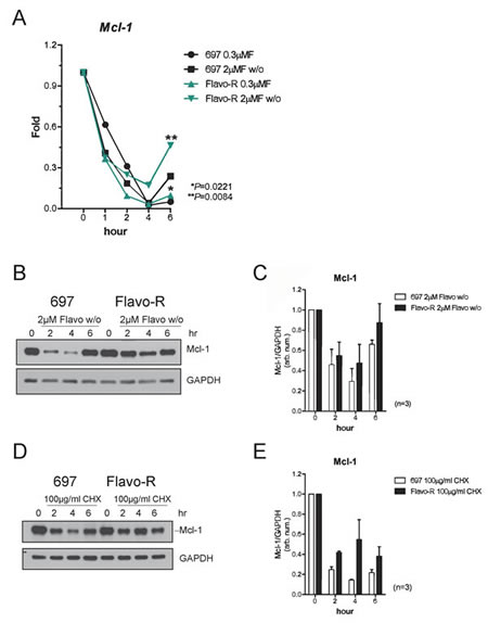 Mcl-1 protein levels are more stable to antagonize the flavopiridol-mediated depletion in Flavo-R.