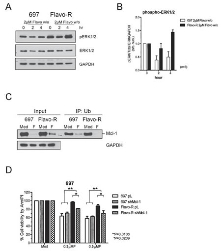 MAPK/ERK-mediated Mcl-1 stabilization contributes to resistance of flavopiridol and shRNA knockdown of Mcl-1 restores partial sensitivity to flavopiridol.