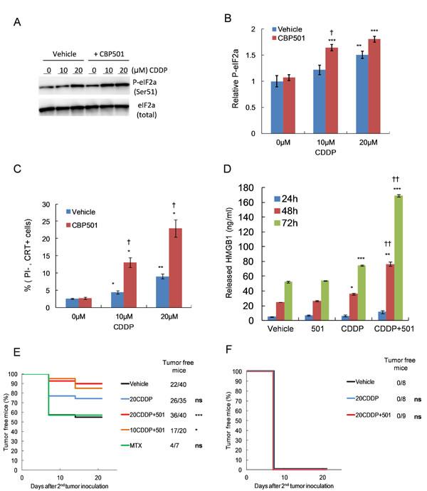 CBP501 enhances CDDP-induced immunogenic cell death both