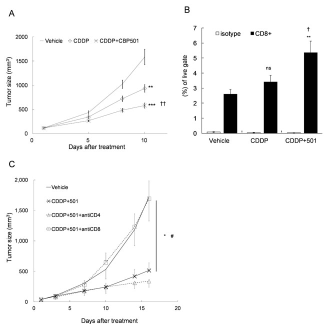 Upregulation of the percentage of CD8+ T cell in the tumor tissue by CDDP plus CBP501 treatment.