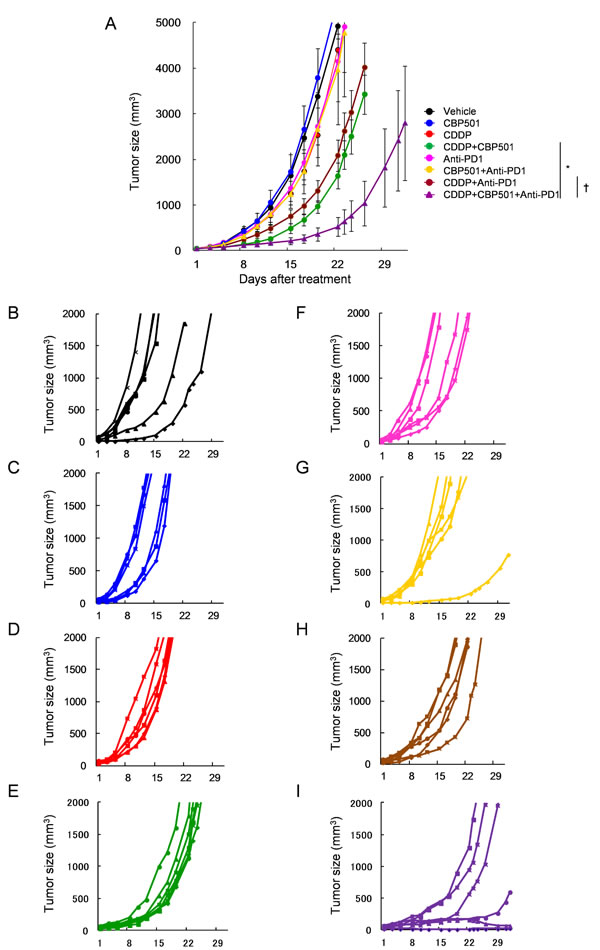 Anti-tumor effects of CDDP or CDDP plus CBP501 in combination with anti-PD-1 antibody.