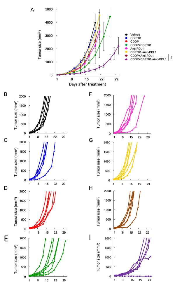 Anti-tumor effects of CDDP or CDDP plus CBP501 in combination with anti-PD-L1 antibody.