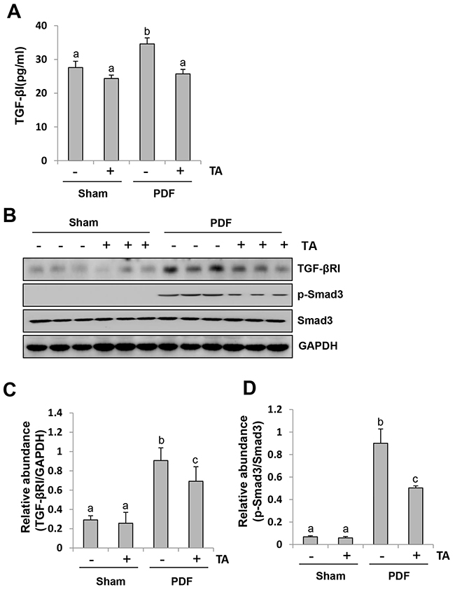 Inhibition of HDAC6 blocks activation of TGF-β1 signaling in the peritoneum induced by high glucose dialysate.