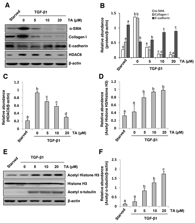 Inhibition of HDAC6 blocks TGF-β1-induced EMT of cultured human peritoneal mesothelia cells.