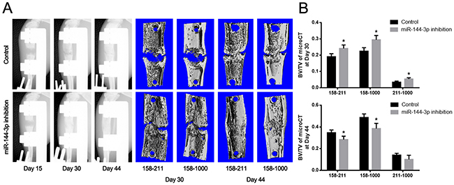 Detection of the newly formed bone by X-ray and microCT examination.