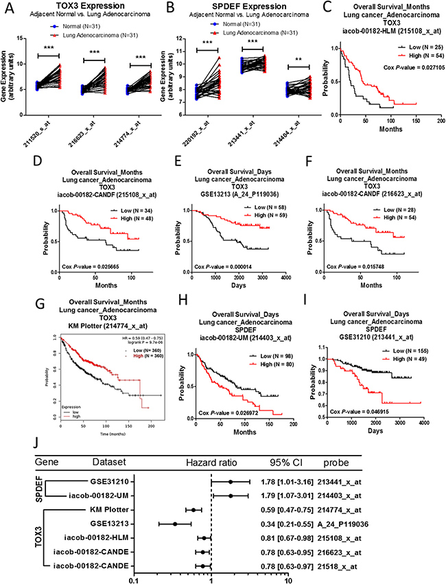 Analysis of TOX3 and SPDEF in clinical lung adenocarcinoma patients using bioinformatics databases.