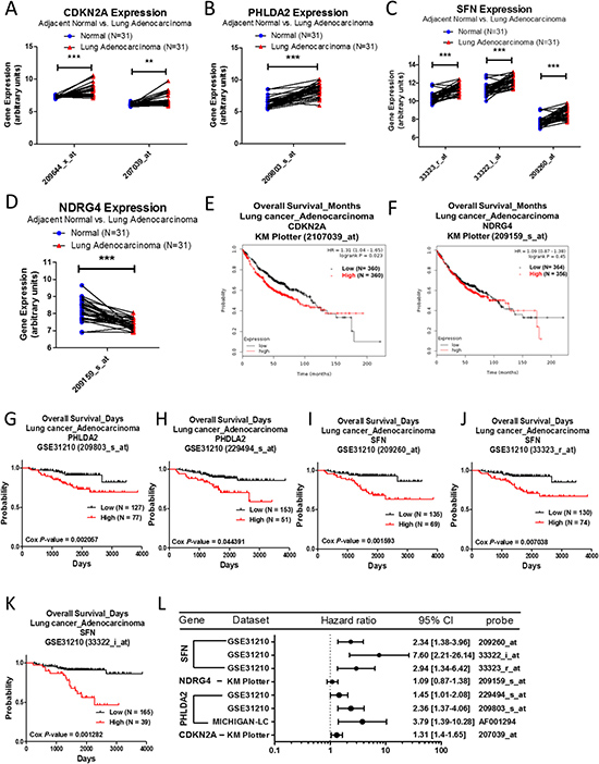 Analysis of CDKN2A, PHLDA2, SFN, and NDRG4 in clinical lung adenocarcinoma patients using bioinformatics databases.
