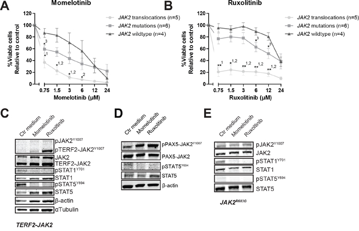 The efficacy of JAK inhibitors on JAK2 translocated and mutated cells.