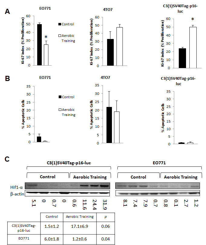 Aerobic training effects on proliferation, apoptosis, and Hif1-α in mouse breast tumors.