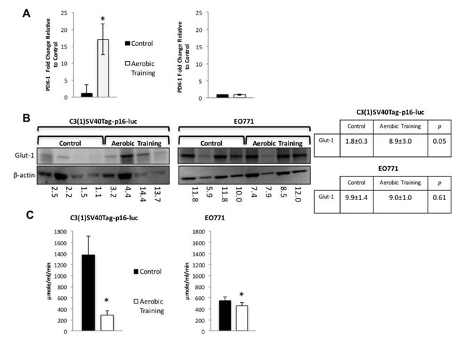 Aerobic training effects on PDK-1 gene expression, Glut-1 protein expression, and citrate synthase activity in mouse breast tumors.