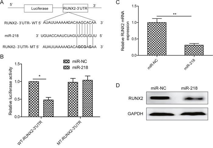 MiR-218 targets RUNX2 in ovarian cancer cells.