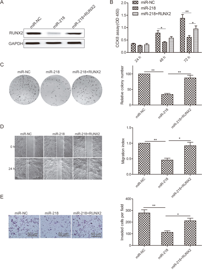 Restoration of RUNX2 reverses miR-218-suppressed cell proliferation, colony formation, migration, and invasion of ovarian cancer cells.