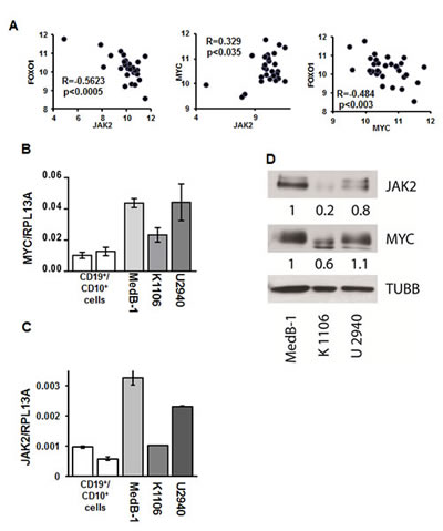 JAK2 and MYC contribute to FOXO1 repression in PMBL.