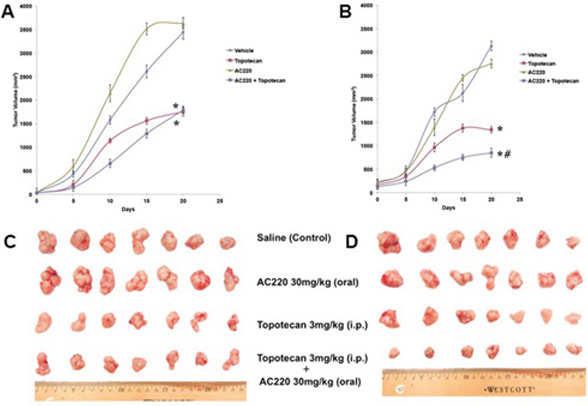 The effect of quizartinib on the tumor growth rate in H460 and H460/MX20 xenografts.