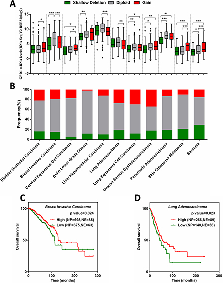 Correlation between GPD1 mRNA expression and disease outcome in several types of human cancers.