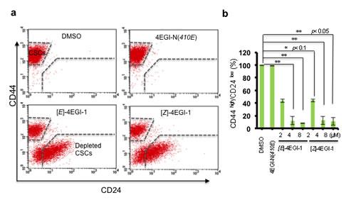 4EGI-1 promotes breast CSC differentiation.