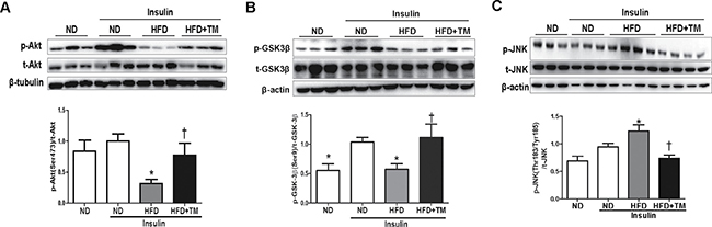 Early TM5441 treatment enhanced hepatic insulin signaling in HFD mice.