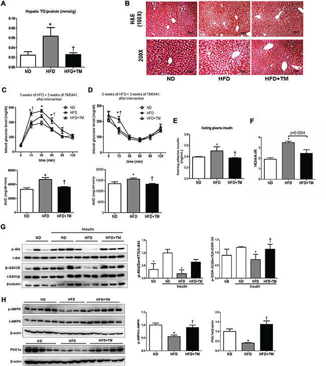 Delayed TM5441 treatment ameliorated HFD-induced NAFLD and metabolic disorder.