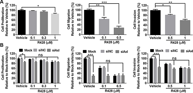Axl-targeting inhibitor R428 inhibits the proliferation, migration and invasion of mouse tumor cells.