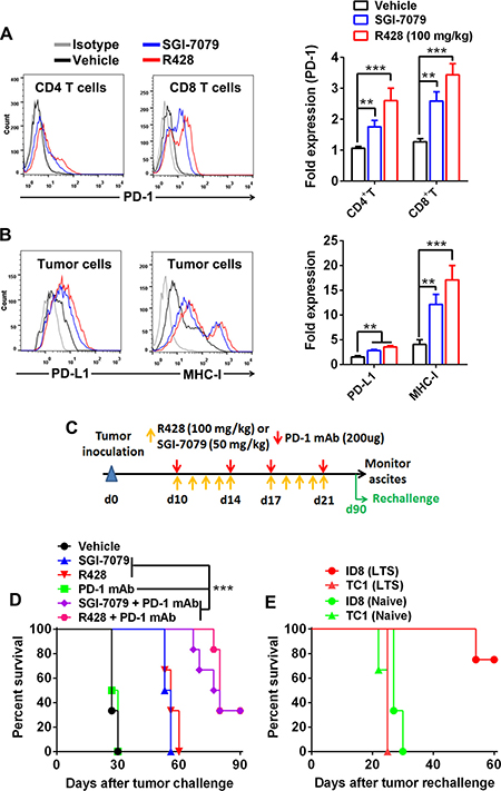 Axl inhibition activates PD-1/PD-L1 pathway and produces a synergistic antitumor effect with PD-1 blockade.