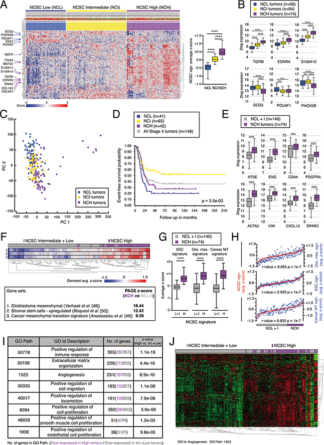 A neural crest stem cell (NCSC) gene signature segregates stage 4/M NB tumors and is associated to tumor aggressiveness.
