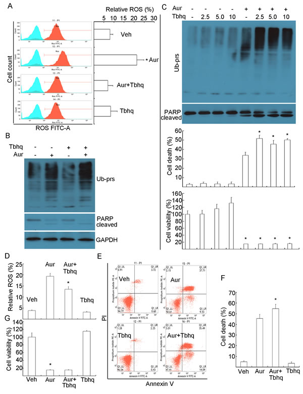 Phenol-containing antioxidant Tertiary butylhydroquinone (Tbhq) could scavenge Aur-induced ROS generation but could not rescue Aur-induced proteasome inhibition and apoptosis.