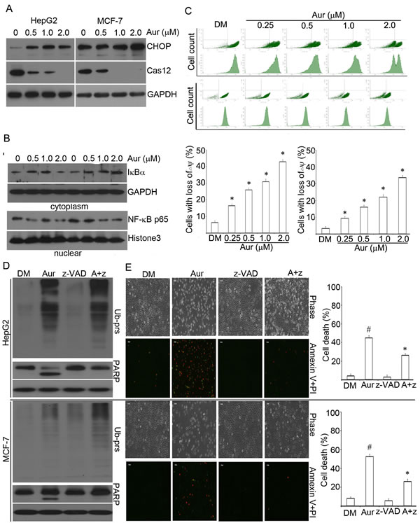 Aur interferes with multiple apoptosis-related signal pathways in cancer cells.