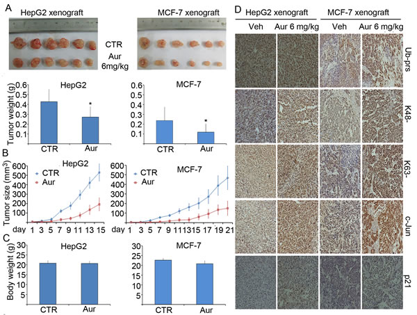 Aur inhibits tumor growth and the proteasome of tumor xenografts in mice without affecting mouse body weight.