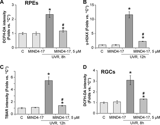 MIND4-17 efficiently attenuates UVR-induced oxidative stress in retinal cells.