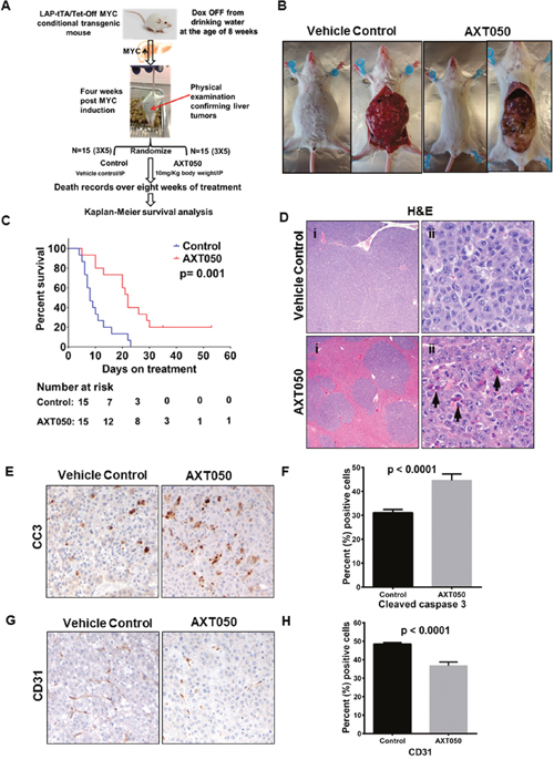AXT050 improved survival of mice with Myc-induced autochthonous liver tumors, reduced HCC tumor microvascular density, and increased apoptosis.