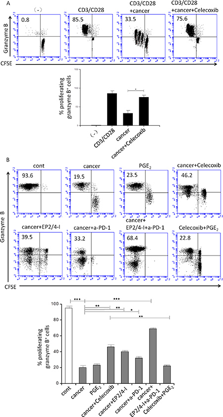 Effect of inhibition of COX2, the EP2 and EP4 (EP2/4-I), and PD-1 on CD3/CD28-induced proliferation of granzyme B+ CTL (percentages) from autologous naïve CD8+ T cells.