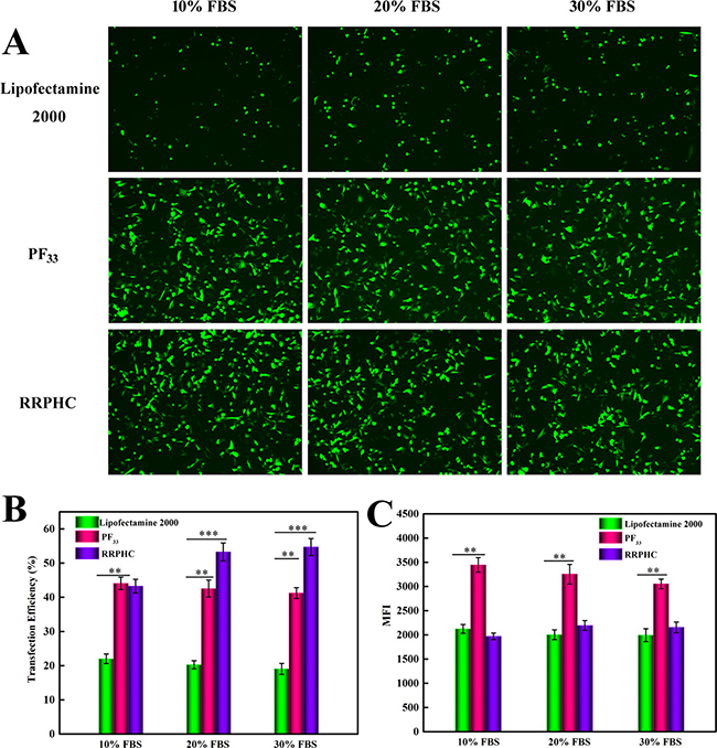 Comparison of the transfection efficiency of PF33/pGFP (PF33), RRPHC/pGFP (RRPHC) and Lipofectamine 2000/pGFP (Lipofectamine 2000) in medium containing 10%~30% serum in SW 480 cell.