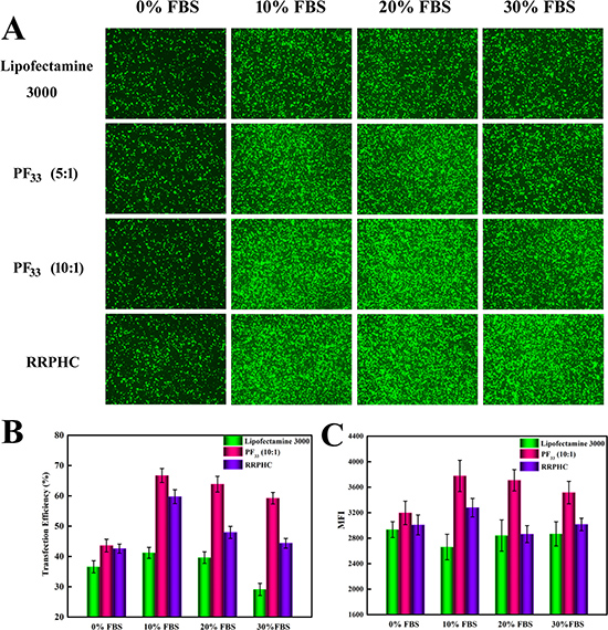 Comparison of the transfection efficiency of PF33/pGFP (PF33), RRPHC/pGFP (RRPHC) and Lipofectamine 3000/pGFP (Lipofectamine 3000) in medium containing 0%~30% serum in SW 480 cell.