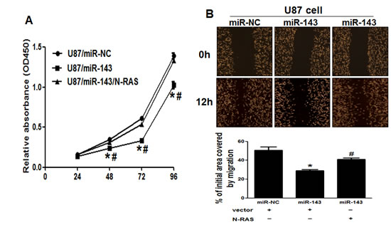 Figure5: Overexpression of N-RAS reverses the inhibitory effects of miR-143.