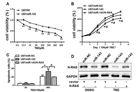 Figure6: Overexpression of miR-143 increases chemosensitivity of glioma cells to TMZ by inhibiting its target N-RAS.