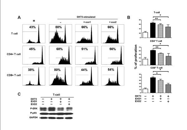 Inhibition of PBMC proliferation by NPC-derived exosomes.