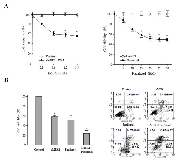 Combination treatment of sMEK1 and a chemotherapeutic drug significantly enhances cytotoxicity to carcinoma cells.