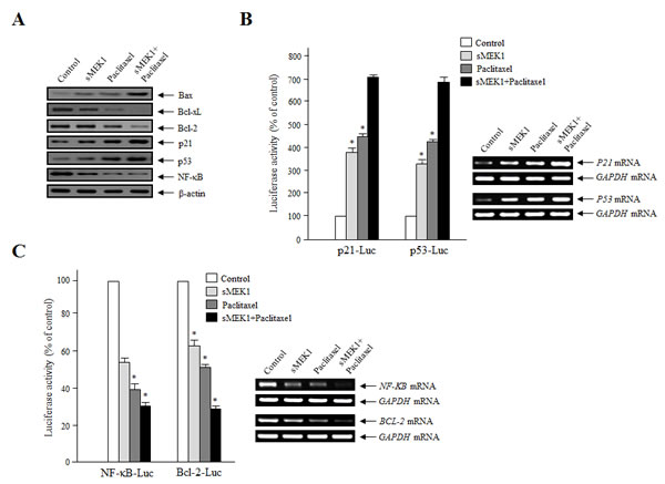 Effects of sMEK1 and paclitaxel on apoptosis-regulatory proteins, and the transcriptional activity of p21, p53, NF-κB, and the Bcl-2 promoter.
