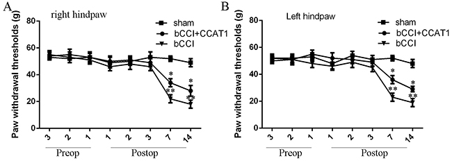 Functional analysis of CCAT1 in neuropathic pain model.