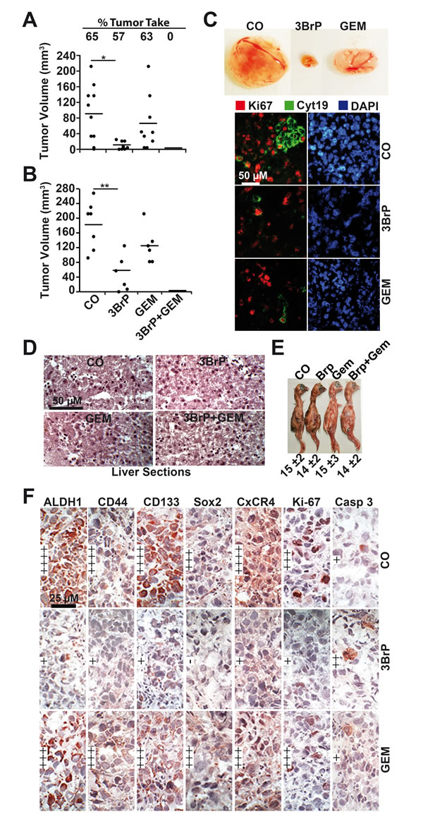 3BrP inhibits tumor growth and inhibits CSC marker expression