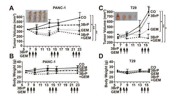 3BrP inhibits tumor growth in mice and increases gemcitabine efficacy.