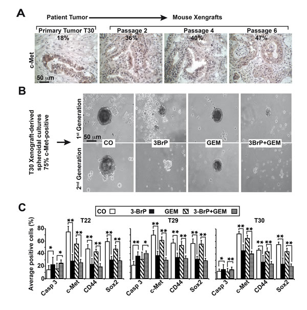 3BrP eliminates primary CSCs derived from patient tissue.