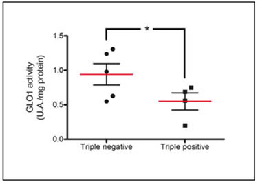 Increased Glo-1 activity in triple negative breast cancer tumors in comparison with triple positive ones.