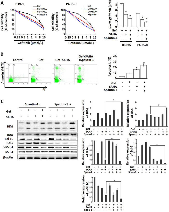 Growth-inhibition and apoptosis-induction by combined treatment with vorinostat and gefitinib were enhanced by inhibiting autophagy.