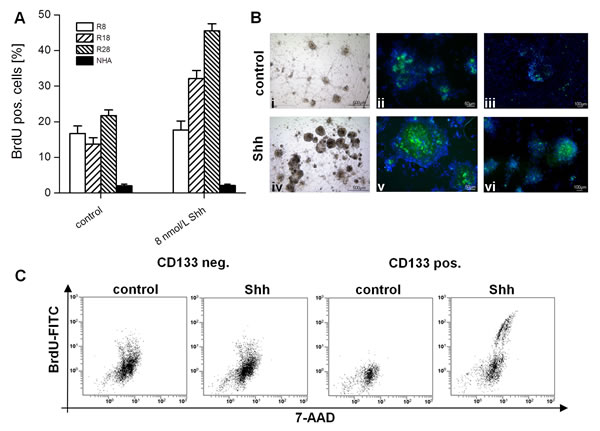 Effect of SHH stimulation on proliferation of glioma cells and normal astrocytes.