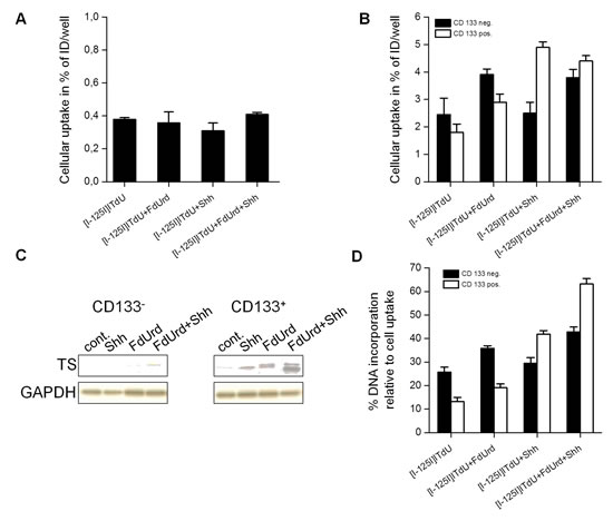Effects of FdUrd and SHH conditioning on cellular uptake and DNA-incorporation of [I-125]ITdU in normal astrocytes and CD133